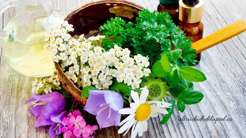 Plantas medicinales para eliminar el acné